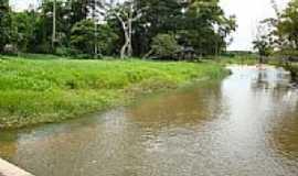Ipixuna do Pará - Rio Ipixuna, mata ciliar (margem direita) po laudjb