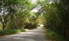 Boca da Mata - Boca da Mata-AL-Estrada t�nel verde-Foto:C�cero Omena