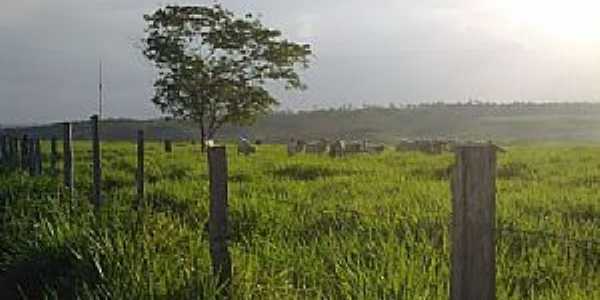 Nova Esperança do Piriá-PA-Área de Pastagem-Foto:www.connhecer.tur.br