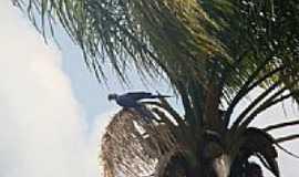 Novo Progresso - Arara Azul Grande em Novo Progresso-PA-Foto:Ernandi Schnurr