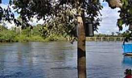 Novo Progresso - Castanheira às margens do Rio Jamanxim em Novo Progresso-Foto:CICLO MANIA Novo Pro…
