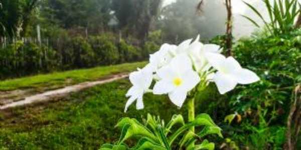 Flor nativa, Por Tiago Santana Rodriguês