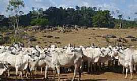 Pacaj� - Munic�pio de Pacaj�- PA:Fazenda de gado.