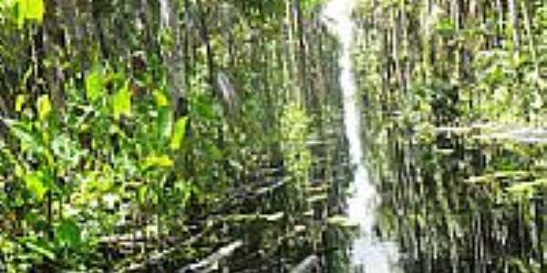 Buritizal no Rio Jaurucu,Xingu, em Porto de Moz-PA-Foto:Alvarez Junior
