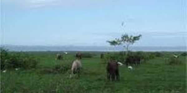 Campos Marajóara...Santa Cruz do Ararí, Por Kleyton pereira leal