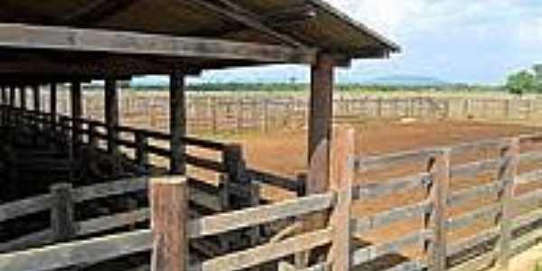 Fazenda em Santa Maria das Barreiras-Foto:urbanosefazendas.