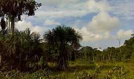 Santa Maria do Pará - Santa Maria do Pará-PA-Vegetação da região-Foto:andreicmt