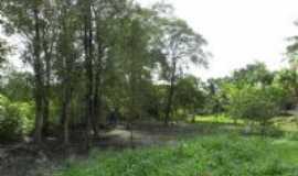 Santarém Novo - Bosuqe de mangueiros (manguezal) - berçário da vida marinha, -., Por Fernando Macedo.