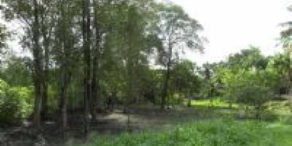 Bosuqe de mangueiros (manguezal) - berçário da vida marinha, -., Por Fernando Macedo.