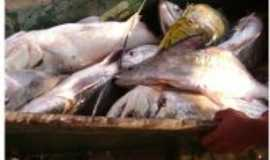 São Félix do Xingu - Por E. Teles
