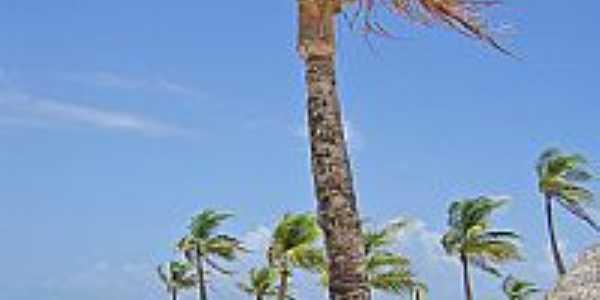 Soure-PA-Coqueiros e lazer na Praia do Pesqueiro-Foto:niani