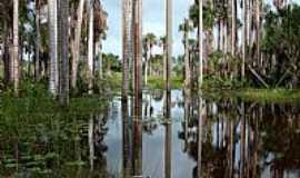 Tracuateua - Tracuateua-PA-Natureza-Foto:Cal Tedde