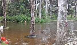 Tracuateua - Tracuateua-PA-Rio Ponte-Foto:Rai 389
