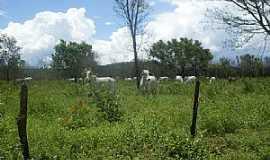 Canápolis - Canápolis-BA-Criação de gado no Povoado do Galheiro-Foto:oeste bahiano