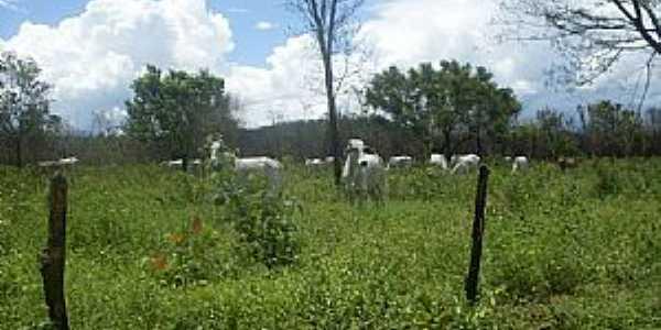 Canápolis-BA-Criação de gado no Povoado do Galheiro-Foto:oeste bahiano