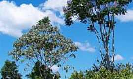 Vila Planalto - Meio ambiente preservado em Vila Planalto-Foto:Heraldo Amoras