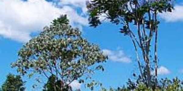 Meio ambiente preservado em Vila Planalto-Foto:Heraldo Amoras
