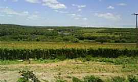 Canarana - Agricultura à beira do Rio Jacaré em Canarana-BA-Foto:MMAlencar