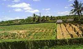 Canarana - Fazenda em Canarana-BA-Foto:MMAlencar