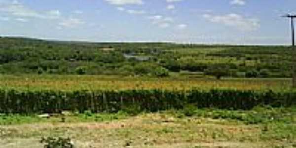 Agricultura à beira do Rio Jacaré em Canarana-BA-Foto:MMAlencar