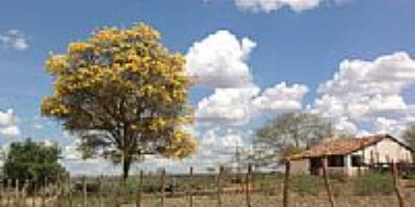 Área rural de Canché-BA-Foto:Adriano_Rodrigo