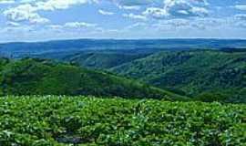 Belém - Plantação de feijão no Sítio Angelim