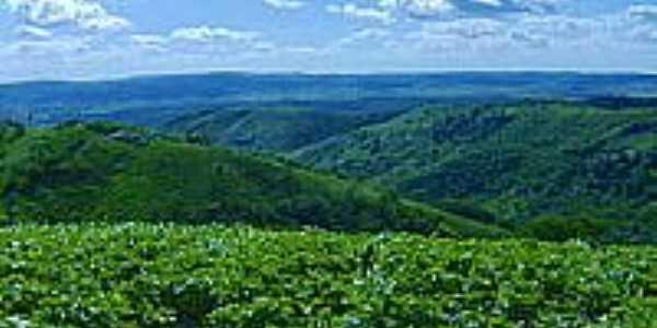 Plantação de feijão no Sítio Angelim