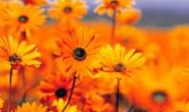 Ingá - flores d ingá, Por luiz