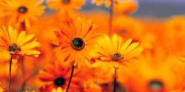 flores d ing�, Por luiz