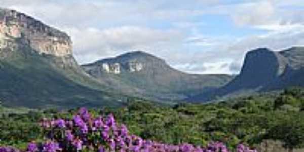 Flores e o Morrão em Capão-BA-Foto:danielschnitzer