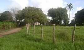 Mari - Marí-PB-Sítio em área rural-Foto:Ronalddlima