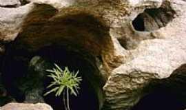 Pedra Lavrada - Poço e Planta