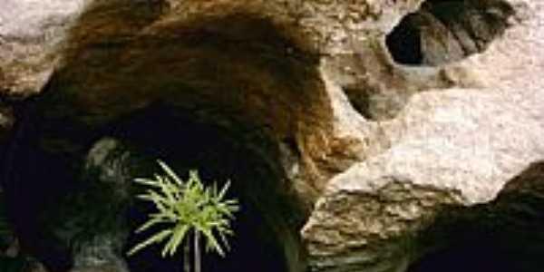 Poço e Planta
