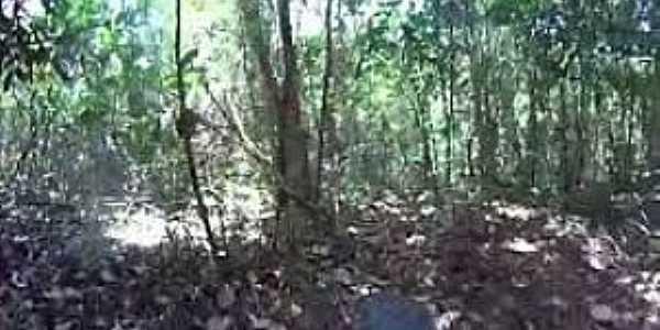 Pitanga da Estrada-PB-Vegetação da região-Foto:www.tritontv.com