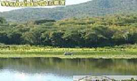 Santarém - Vegetação local
