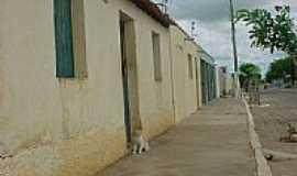 Santo André - O Gato