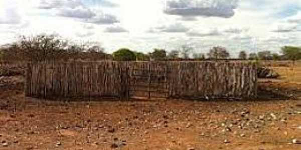 São José do Brejo da Cruz-PB-Área rural-Foto:br.distanciacidades.com