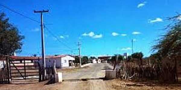 São José do Brejo da Cruz-PB-Mata Burro na entrada da cidade-Foto:vereadorajanaina.blogspot.com