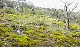 Carrapichel - Carrapichel-BA-Vegetação da região-Foto:David Cordeiro