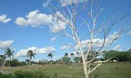 Carrapichel - Carrapichel-BA-Vista da Rodovia BR-407-Foto:Jorge Hirata