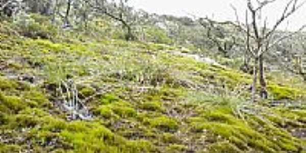 Carrapichel-BA-Vegetação da região-Foto:David Cordeiro