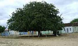 Afrânio - Tamarindeiro-Foto:MAGNO.SILVA