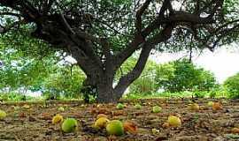 Arcoverde - Arcoverde-PE-Umbuzeiro-Foto:Novais Almeida