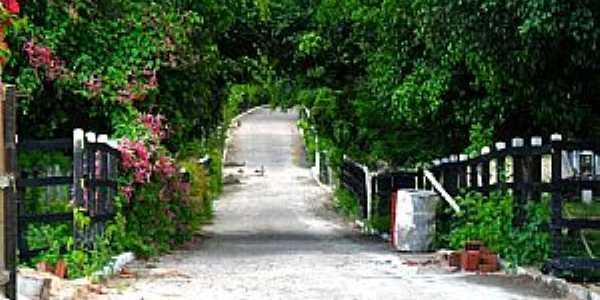 Arcoverde-PE-Passagem florida-Foto:Novais Almeida