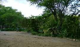 Belo Jardim - Parque do Bambu