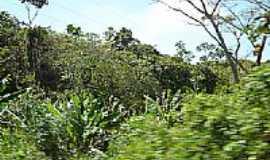 Escada - Mata-Foto:pernambucano