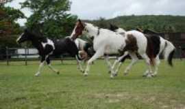 Gravatá - Gravatá um dos maiores polos de criação de cavalos de raça,