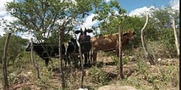 Grotão-PE-Vida rural-Foto:Professor.Walber