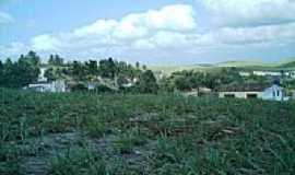 Ibiratinga - Plantação de Cana de Açucar-Foto:Laudemir