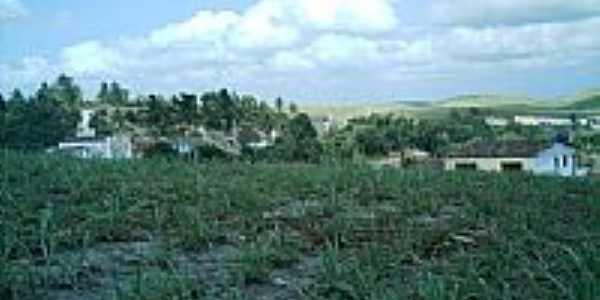 Plantação de Cana de Açucar-Foto:Laudemir